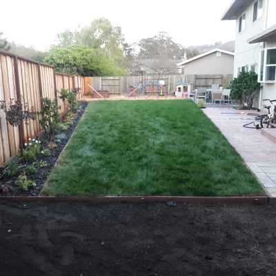 Rosa's Maintenance Landscaping